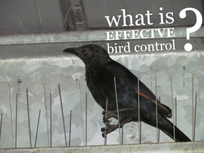 What is effective bird control?