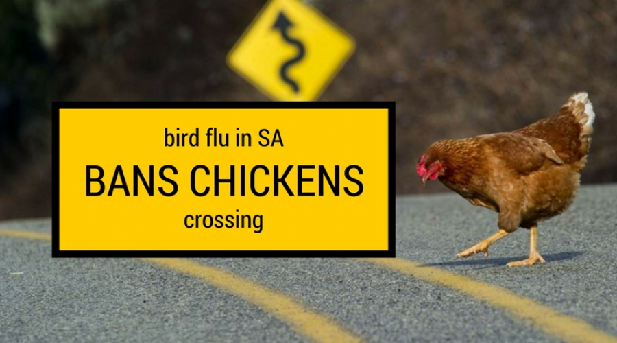 Bird Flu scare in South Africa. Chickens at risk